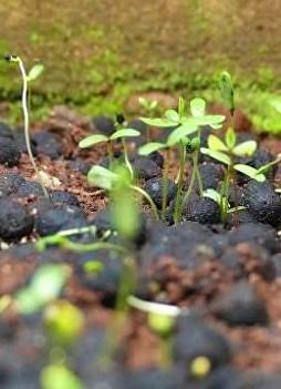 Filosofia e applicazione della coltivazione naturale con Kutluhan Ozdemir